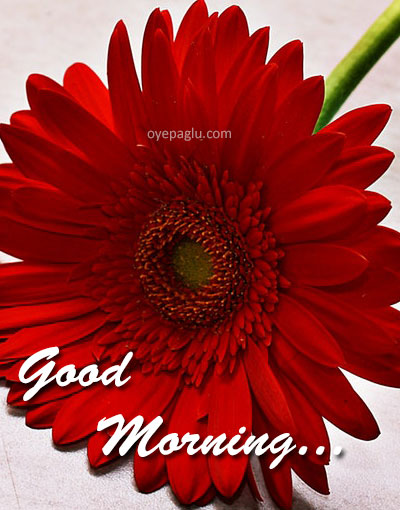 Beautiful good morning red flower