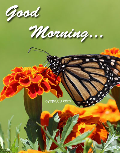 Flower and butterfly good morning image