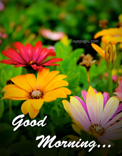 50 Good Morning Flower Images Free Download Hd