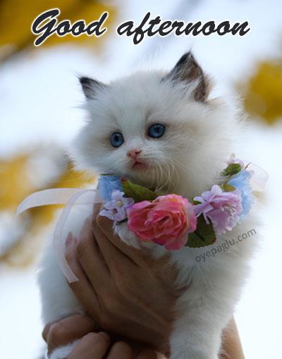 cat goodafternoon image