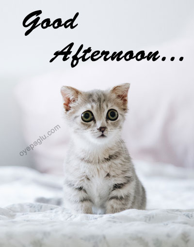 cute cat good afternoon image