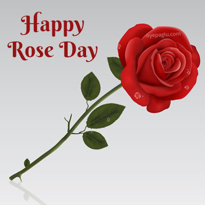happy rose day single red rose