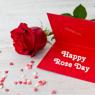 happy rose day with card and rose