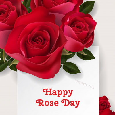 rose buke happy rose day image