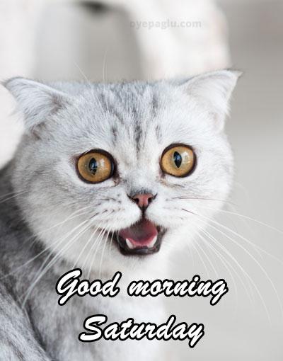 cat at morning good morning saturday image
