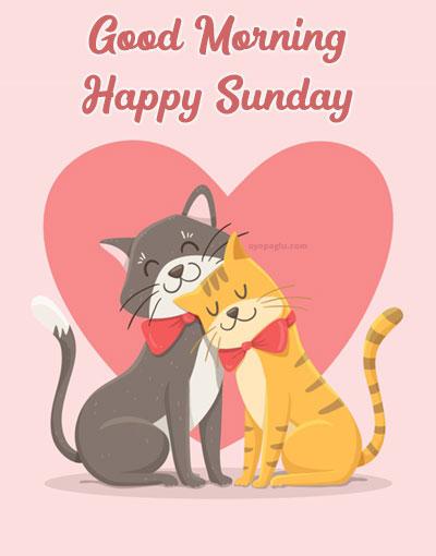 cat love good morning sunday image