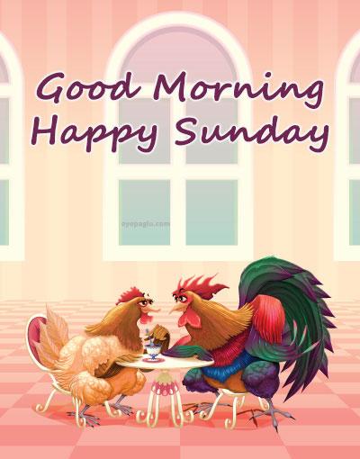 chicken romance good morning sunday image