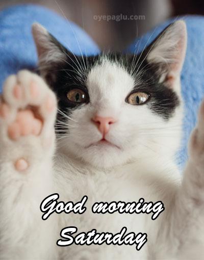 cute cat good morning saturday image