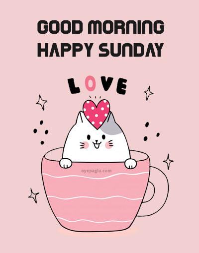 cute cat good morning sunday image