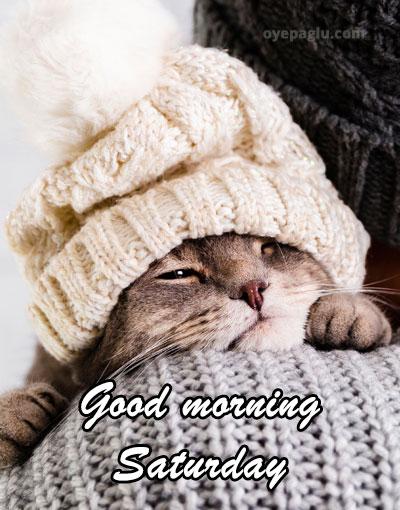 cutest cat good morning saturday image