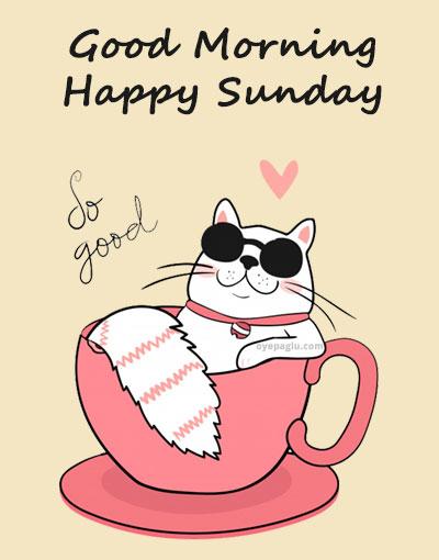 funny cat good morning sunday image