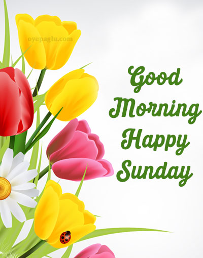 special-flower good morning sunday image