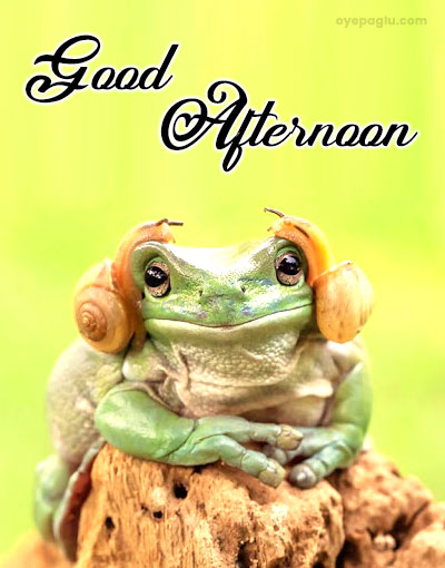 cute frog good afternoon wishes