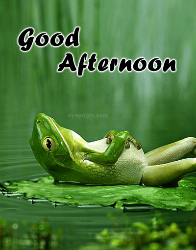 frog good afternoon wishes