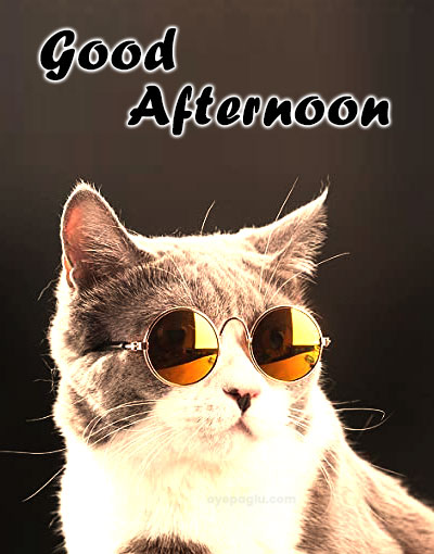 stylish cat with glasses good afternoon wishes