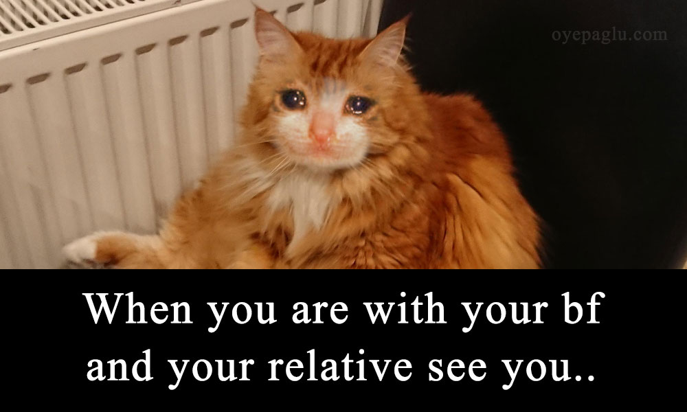 crying cat meme