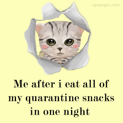 quarantine crying cat meme