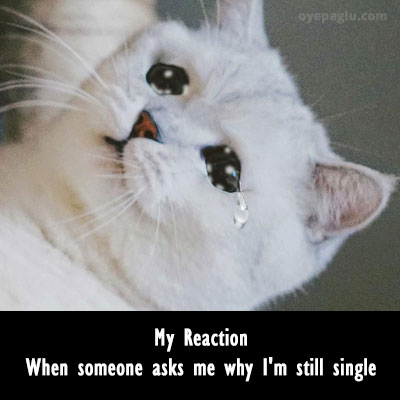 still single crying cat meme