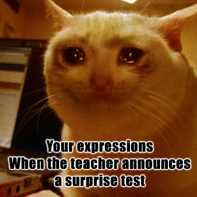 surprise test crying cat meme