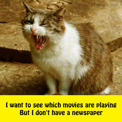 which movies are playing crying cat meme