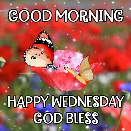 good morning happy wednesday god bless