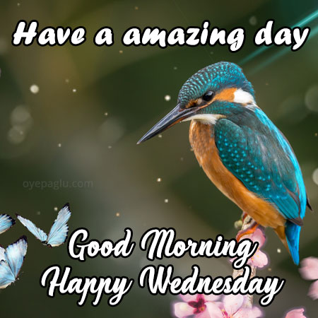 have a amazing day happy wednesday