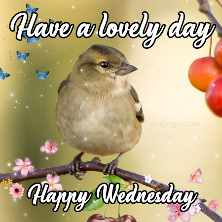 have a lovely day happy wednesday