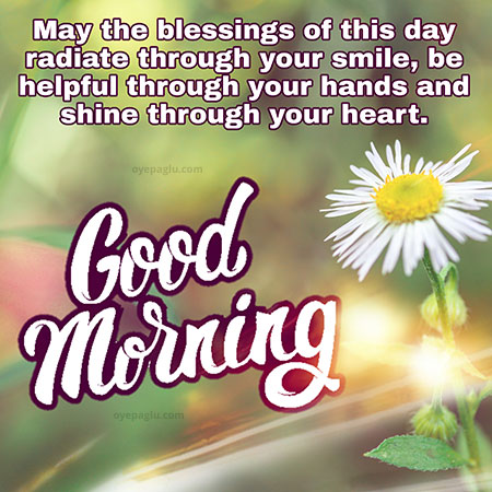 Latest Flowers Hd Image With Morning Blessing
